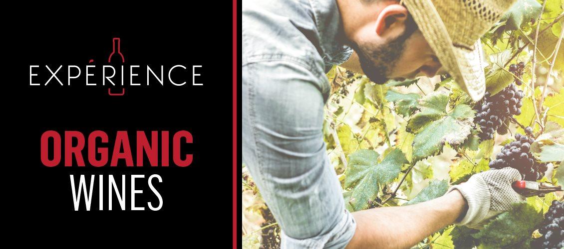 P5-Experience-Header-OrganicWines-EN